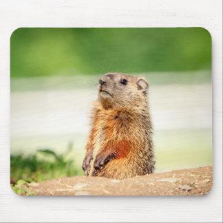 Jeune Groundhog Tapis De Souris