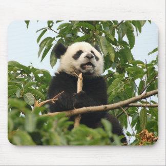 Jeune mousepad de panda géant tapis de souris