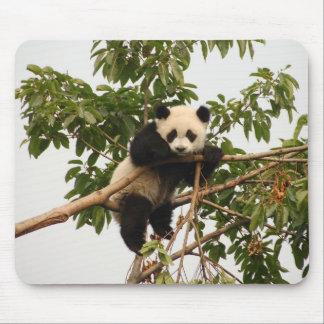 Jeune panda géant tapis de souris