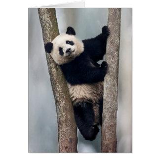 Jeune panda grimpant à un arbre, Chine Carte De Vœux