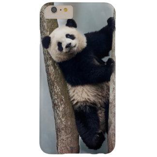 Jeune panda grimpant à un arbre, Chine Coque iPhone 6 Plus Barely There