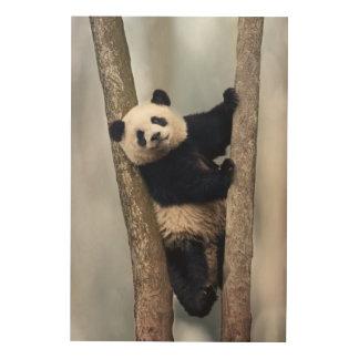 Jeune panda grimpant à un arbre, Chine Impression Sur Bois