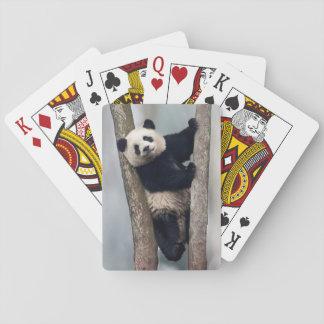 Jeune panda grimpant à un arbre, Chine Jeux De Cartes
