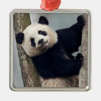 Jeune panda grimpant à un arbre, Chine Ornement Carré Argenté