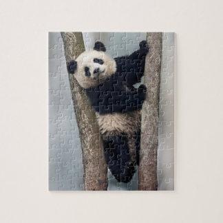 Jeune panda grimpant à un arbre, Chine Puzzle