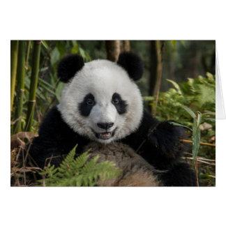 Jeune panda heureux, Chine Carte De Vœux