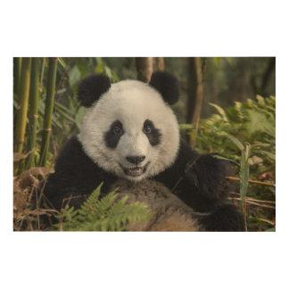 Jeune panda heureux, Chine Impression Sur Bois