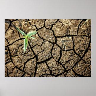 Jeune plante en terre criquée poster