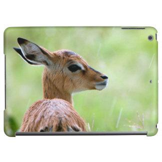 Jeune portrait de poulain d'impala (Aepyceros