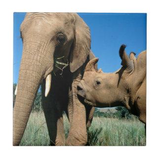 Jeune rhinocéros blanc petit carreau carré