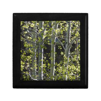 Jeunes arbres d'Aspen Boîte À Souvenirs