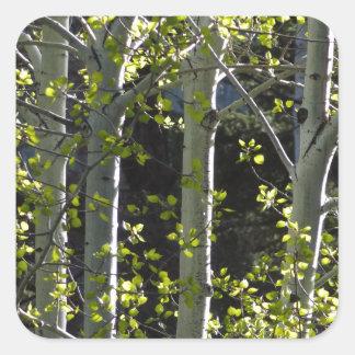 Jeunes arbres d'Aspen Sticker Carré