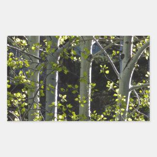 Jeunes arbres d'Aspen Sticker Rectangulaire