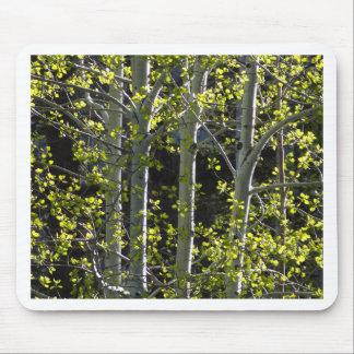 Jeunes arbres d'Aspen Tapis De Souris