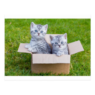 Jeunes chats dans la boîte de cartboard sur carte postale
