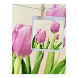 Jjhelene de carte postale de Saint-Valentin de