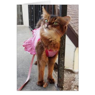 Joli chat somalien dans la robe pour l'automne cartes