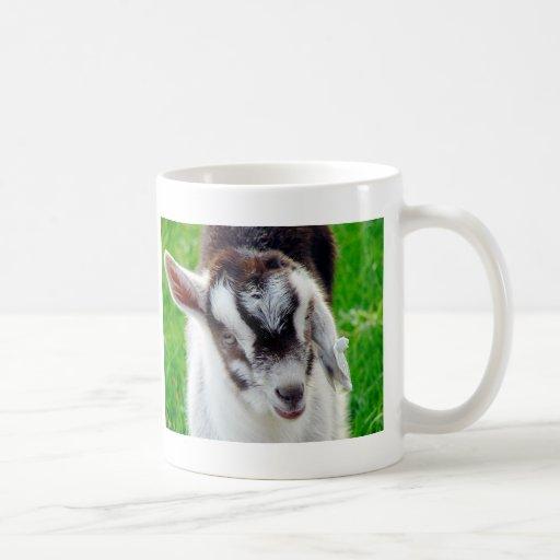 Joli enfant de chèvre tasse