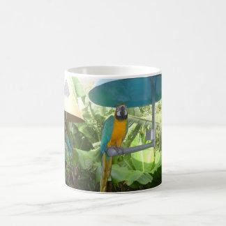 Joli perroquet mug