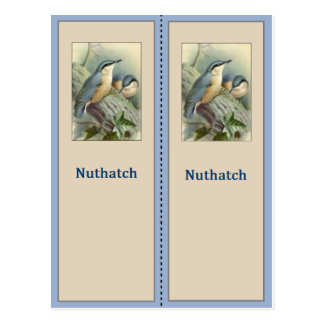 Joli signet d'oiseau de sittelle carte postale