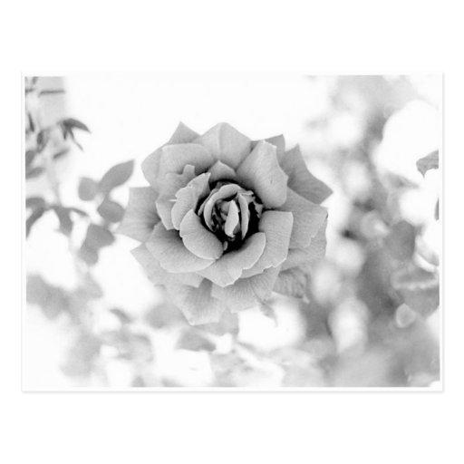 Jolie fleur carte postale