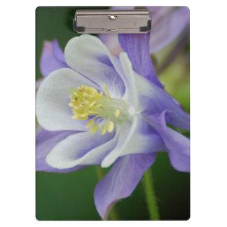 Jolie fleur de Columbine
