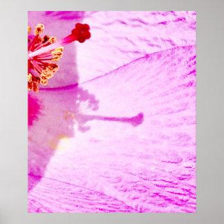 Jolie fleur de ketmie posters