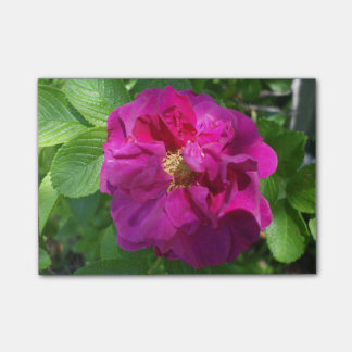 Jolie fleur rose