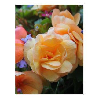 Jolies fleurs carte postale