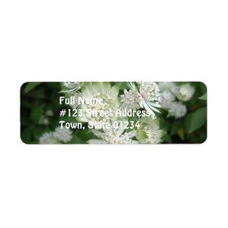 Jolies fleurs d'Astrantia Étiquette D'adresse Retour