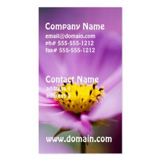 Jolies fleurs de cosmos carte de visite standard