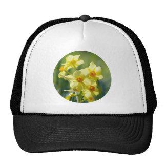 Jolies jonquilles, narcisse 03.2_rd casquettes de camionneur
