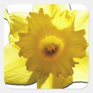Jonquille 1,0 de trompette jaune sticker carré