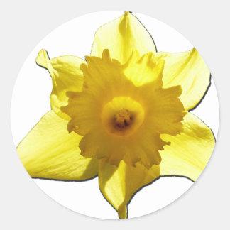Jonquille 1,0 de trompette jaune sticker rond