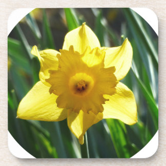 Jonquille jaune 02.2_rd sous-bocks