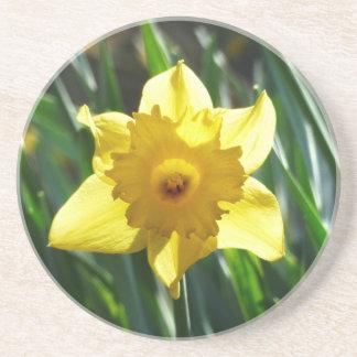 Jonquille jaune 03.0.g dessous de verres