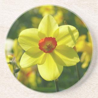 Jonquille jaune-orange 02.0_rd dessous de verres