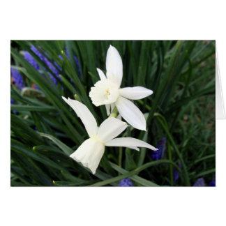 Jonquilles blanches de Thalia Carte De Vœux