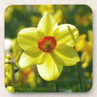 Jonquilles jaune-orange 02.1g dessous-de-verre