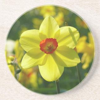 Jonquilles jaune-orange 02.2o dessous de verres