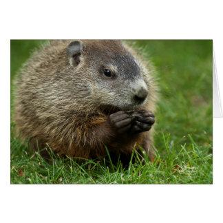 Jour de Groundhog Woody Carte De Vœux
