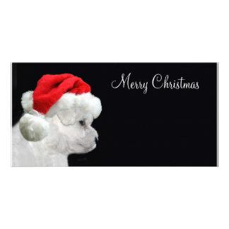 Joyeux Noël Bichon Frise Cartes De Vœux Avec Photo