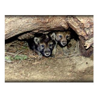 Jumeau sauvage CUB de loup de bois de construction Carte Postale