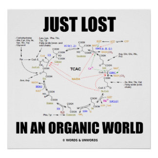 Juste perdu dans un monde organique (cycle de Kreb Posters