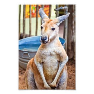 Kangourou mignon impressions photographiques