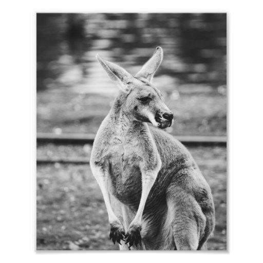 Kangourou noir et blanc photos d art zazzle for Art minimaliste noir et blanc