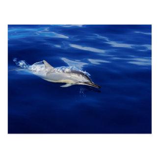 Kauai - dauphin se cassant librement carte postale