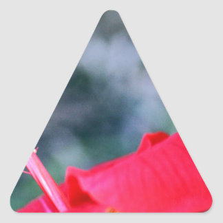 Ketmie 4 sticker triangulaire