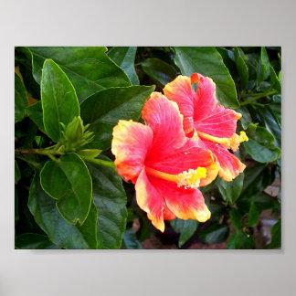 Ketmie rose, arbre et de beauté sensible poster