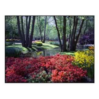 Keukenhof fait du jardinage Pays-Bas, modèle de Carte Postale